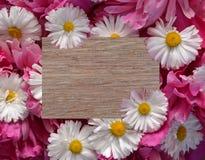 Цветок, рамка, маргаритка, природа, белизна, весна, флористическая, цве стоковые фотографии rf