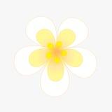 Цветок рамки Стоковые Фотографии RF