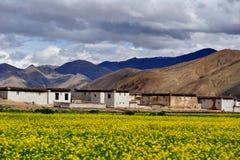 Цветок рапса в Тибете. Стоковая Фотография RF