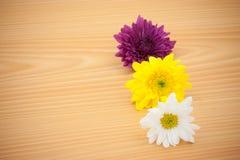 Цветок расположения на деревянной предпосылке Стоковое фото RF
