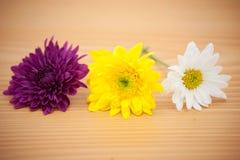 Цветок расположения на деревянной предпосылке Стоковая Фотография RF
