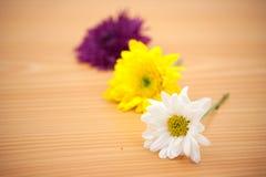 Цветок расположения на деревянной предпосылке Стоковые Фото