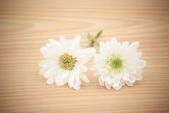 Цветок расположения на деревянном с пустой предпосылкой космоса Стоковая Фотография RF