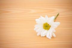 Цветок расположения на деревянном с пустым космосом Стоковое Изображение