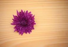 Цветок расположения на деревянном с пустым космосом Стоковая Фотография