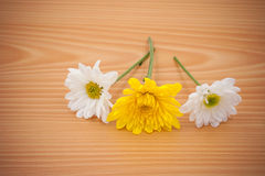 Цветок расположения на деревянном с пустым космосом Стоковые Изображения