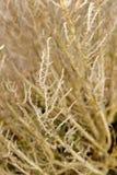 цветок расположения сухой Стоковые Изображения