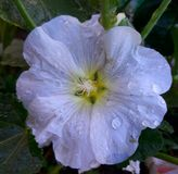 Цветок рая Стоковая Фотография