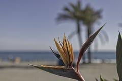 Цветок рая стоковые фотографии rf