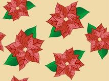цветок рождества Стоковое фото RF