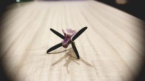 Цветок Розмари Стоковое Изображение RF