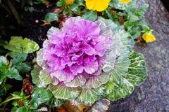 цветок розовый намочил Стоковая Фотография RF