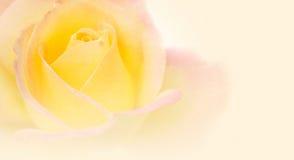 Цветок розы пинка в винтажном стиле цвета на текстуре бумаги шелковицы Стоковые Фотографии RF