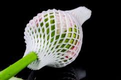 Цветок розы пинка с предохранением от пены Стоковое Изображение RF