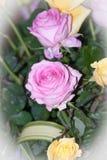 Цветок Розы пинка для валентинки, партии, годовщины, украшения стоковое изображение rf