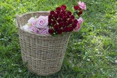 Цветок роз в корзине Стоковое фото RF