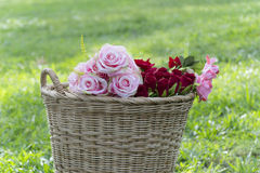Цветок роз в корзине Стоковое Изображение RF