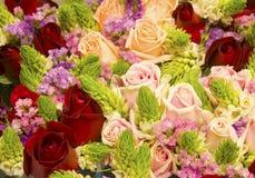 Цветок роз как предпосылка природы Стоковое Изображение