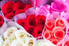 Цветок роз стоковое изображение