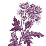 Цветок ручки и чернил Стоковое Фото