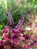 Цветок сада стоковое фото rf