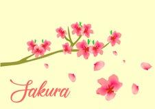 Цветок Сакуры вектора известный в Азии иллюстрация вектора
