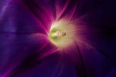Цветок сада с деталями Стоковое Изображение