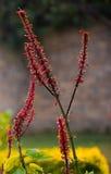 Цветок сада Стоковая Фотография RF