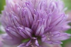 Цветок сада Стоковые Фотографии RF