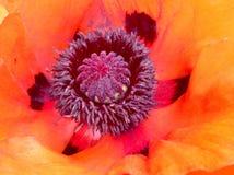 Цветок сада Стоковая Фотография