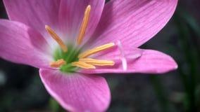 цветок свежий Стоковое фото RF