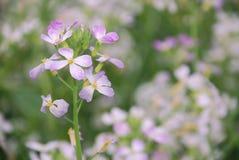 Цветок сезона весны Стоковые Фотографии RF