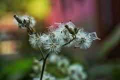 Цветок сезона зимы Westbengal Индии стоковая фотография