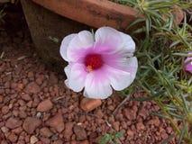 цветок симпатичный стоковые изображения