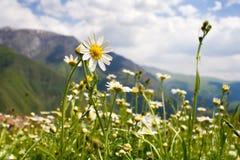 цветок симпатичный Стоковое Изображение