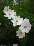цветок симпатичный Стоковое фото RF
