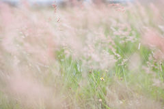 цветок сиротливый Стоковая Фотография