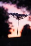 Цветок силуэта Стоковые Изображения RF