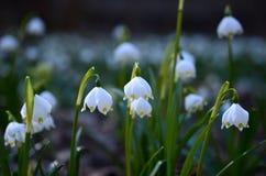 Цветок снежинки Стоковая Фотография RF