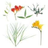 Цветок собрания Стоковое фото RF