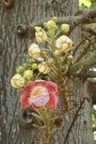 Цветок соли в саде природы стоковое изображение rf