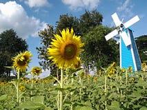 Цветок, солнцецвет стоковое изображение rf