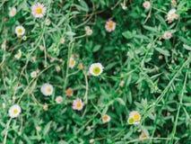 Цветок соломы Стоковая Фотография RF