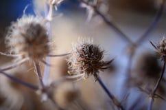 цветок старый Стоковая Фотография RF