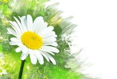 Цветок стоцвета. Влияние акварели стоковая фотография