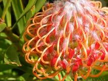 цветок странный Стоковая Фотография
