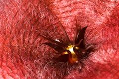 цветок странный Стоковое Фото