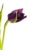 цветок странный Стоковая Фотография RF