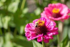 Цветок с лепестками сирени Стоковое Фото