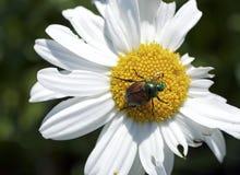 Цветок с жуком Стоковые Изображения